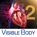 3D Heart and Circulatory Premium 2 icon