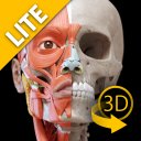 Muscular System Lite icon