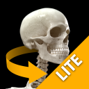 Skeletal System Lite icon