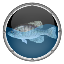 Reef Aquarium HD icon