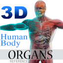 3DHumanBodyOrgansRef icon
