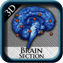 BrainSection3D icon