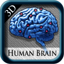 HumanBrainPins3D icon