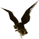 Hawkscope icon